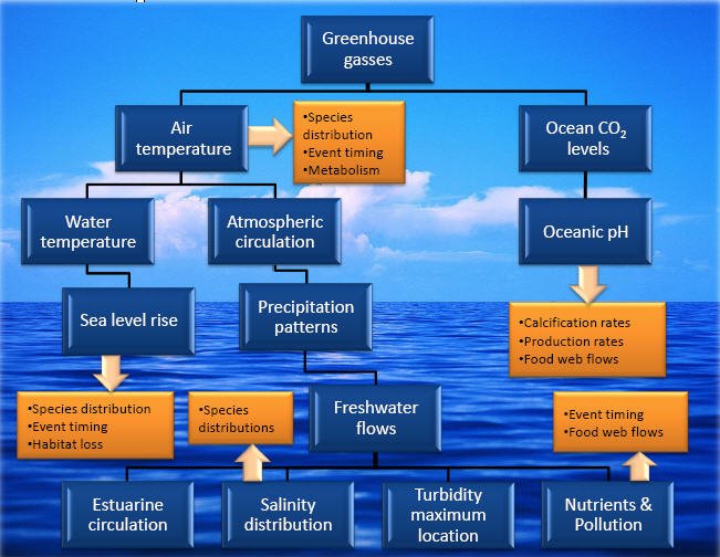 Climate Change  U0026 Coastal Stressors