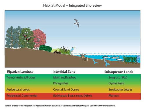 Nearshore Ecology